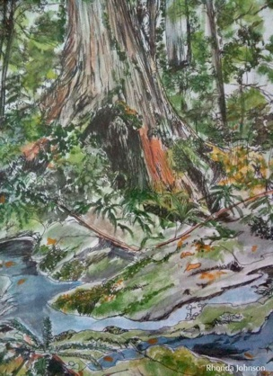Old Growth Water Color by Rhonda Johnson
